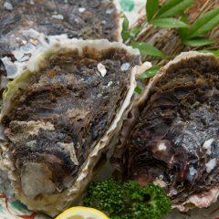 Fresh Iwagaki Oyster