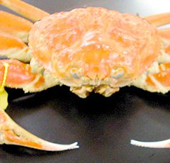 Echizen Crab   Medium size: around 0.9kg ¥18,500