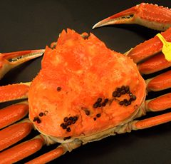 Echizen Crab   Large size: around 1.0kg ¥21,600