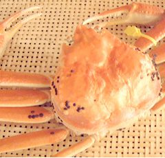 Echizen Crab   Large size: around 1.0kg ¥25,000